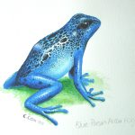 "Blue Poison Arrow Frog, Acrylic on paper, 12x16"" (for WWF Guianas poster)"