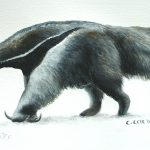 "Giant Anteater, Acrylic on paper, 12x16"" (for WWF Guianas poster)"