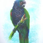 Imperial Parrot, Acrylic on paper,