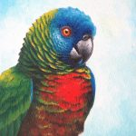 St. Lucia Parrot, Acrylic on canvas, 10x8""