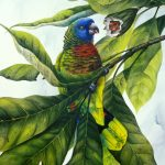 St. Lucia Parrot and bwa pain maron, Watercolour, 30x22""