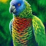'Fine colours' St. Lucia Parrot, Acrylic on canvas,