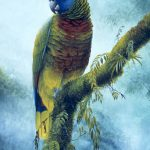 'Majestic' St. Lucia Parrot, Watercolour, 20x16""