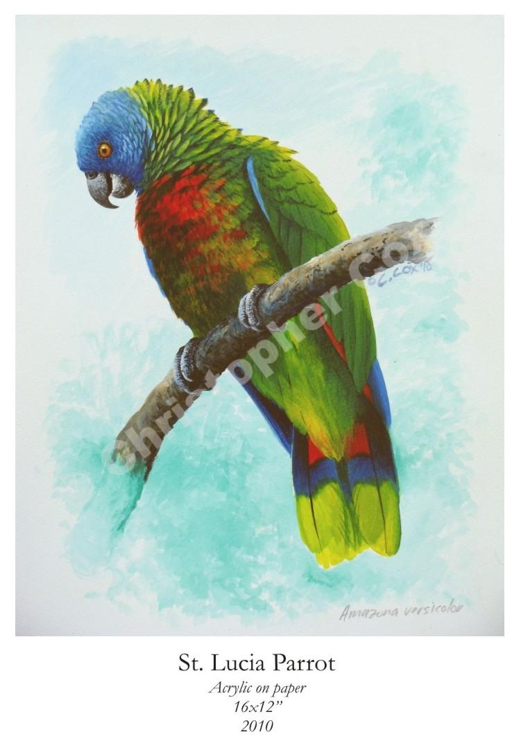 Images Of Small Exhibition Stands : Parrots chris cox originals
