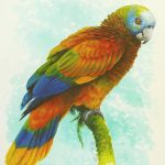 St. Vincent Parrot, Acrylic on paper,