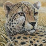 Cheetah, Oil on canvas, 20x16""