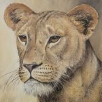 'On guard' Lioness, Oil on canvas, 20x16""