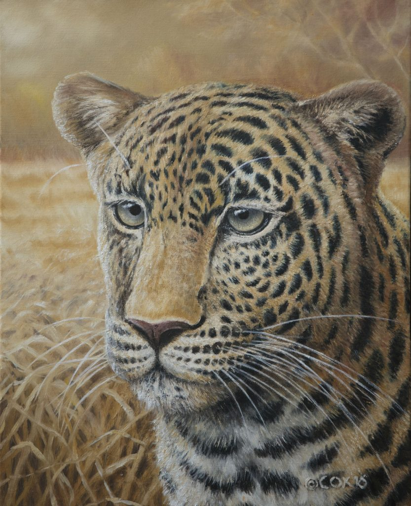 'Intentions' Leopard, Oil on canvas, 20x16""