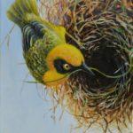 "Speke's Weaver, acrylic on canvas, 30x24cm (11.8x9.4"")"