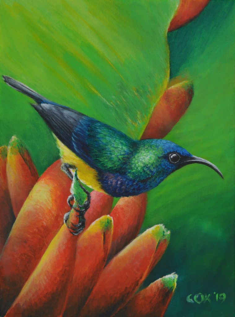 Variable Sunbird Acrylic on canvas 9x12""