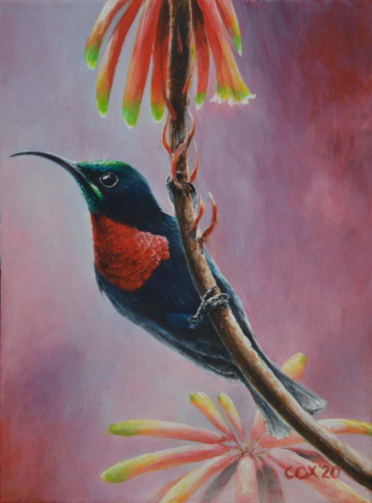 Scarlet-chested Sunbird Acrylic on canvas 9x12""