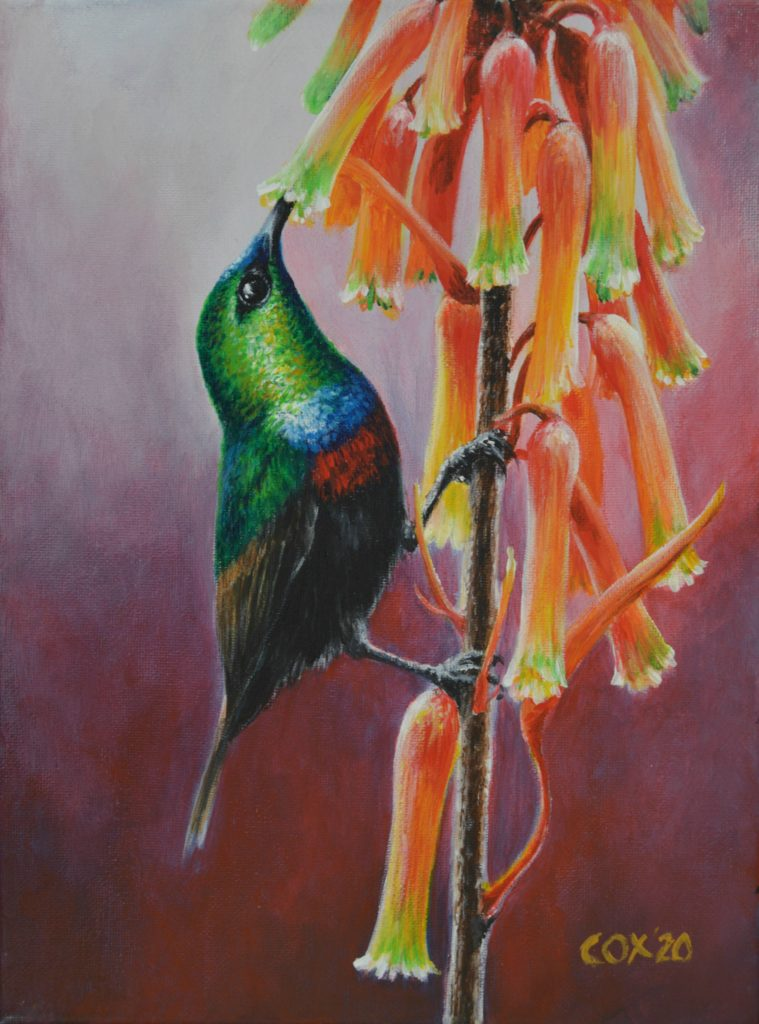 Marico Sunbird Acrylic on canvas 9x12""