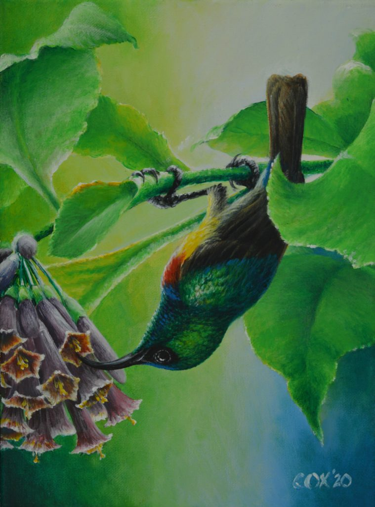 Eastern Double-collared Sunbird Acrylic on canvas 9x12""