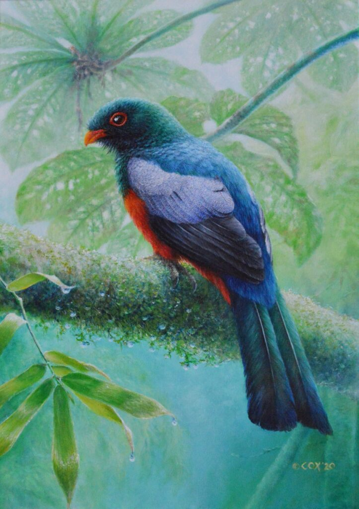 Slaty-tailed trogon, acrylic on canvas 70x50mm