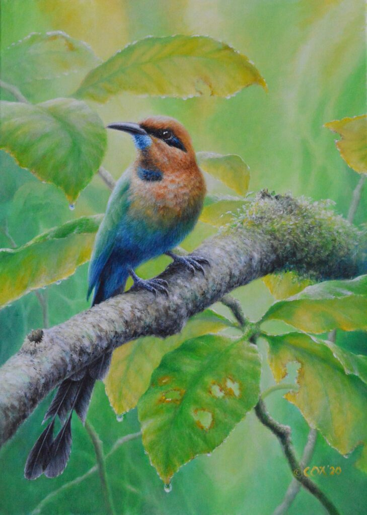 Broad-billed motmot, acrylic on canvas 70x50mm